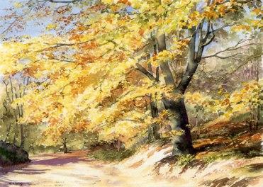 Artists beech in autumn