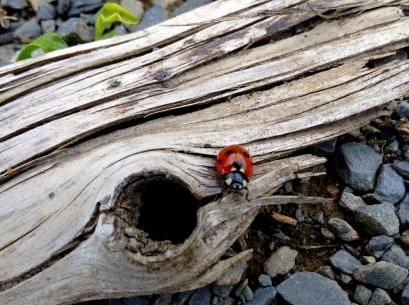 Gentle ladybug