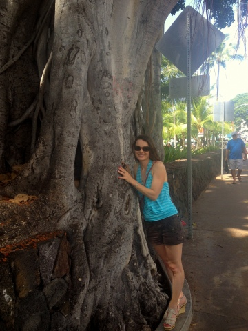 Amazing tree on Kailua main street