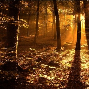 autumn_forest_in_the_sun-2238